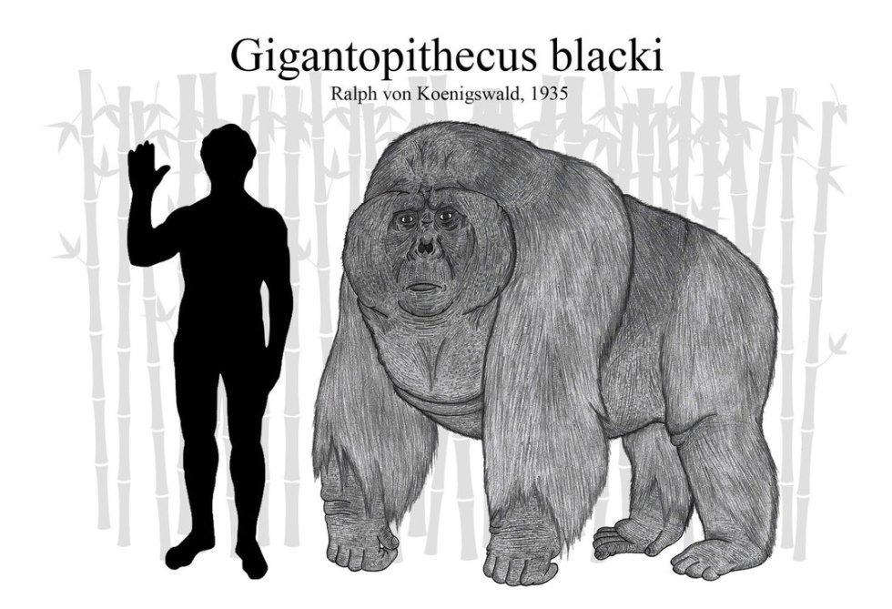 gigantopithecus_blacki__updated__by_rhysdylan01-dbe2l10