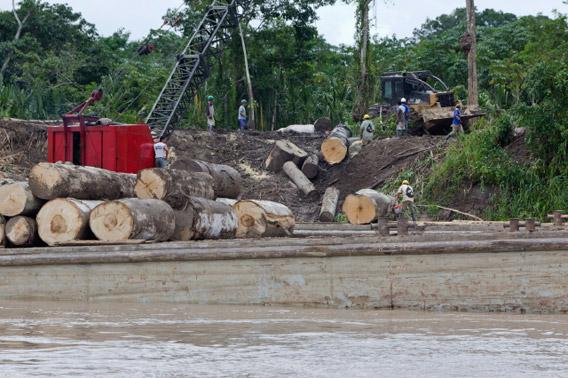 illegal-logging-peru
